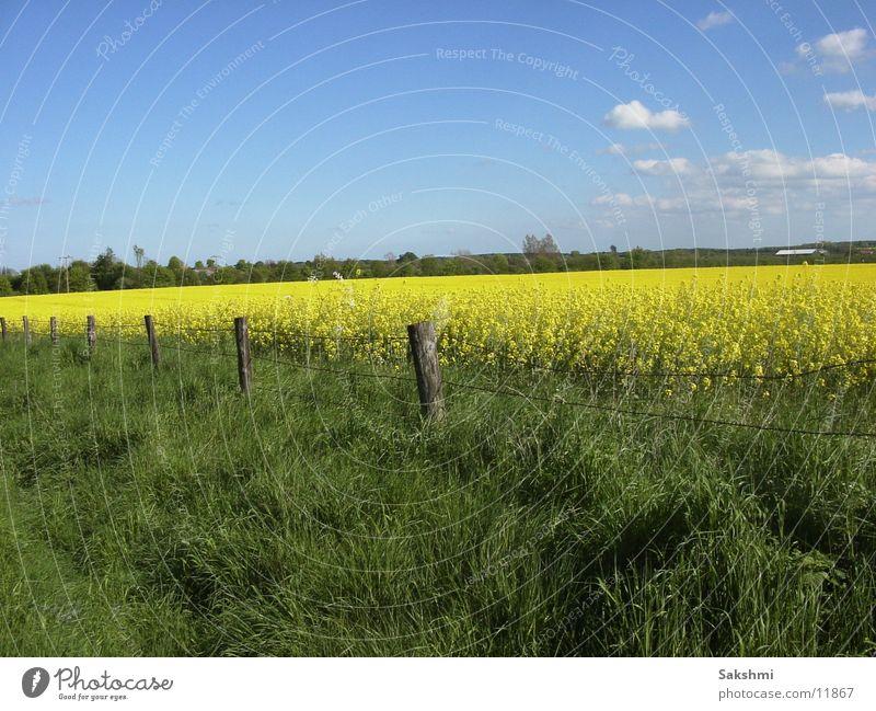rapsfeld rap field fields