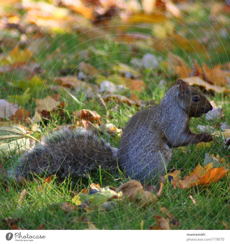 Tree Eyes Meadow Grass Small Park Brown Speed Sweet Ear Cute Pelt Brash Paw Mammal Squirrel