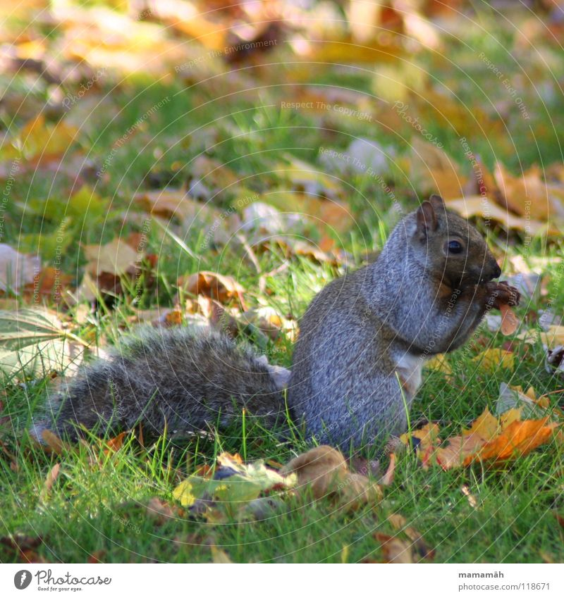 Favourite animal: squirrel! Part 7 Squirrel Paw Bushy Sweet Small Cute Tree Meadow Grass Toronto Park Speed Brown Pelt Rodent Mammal Be confident Brash Ear Eyes