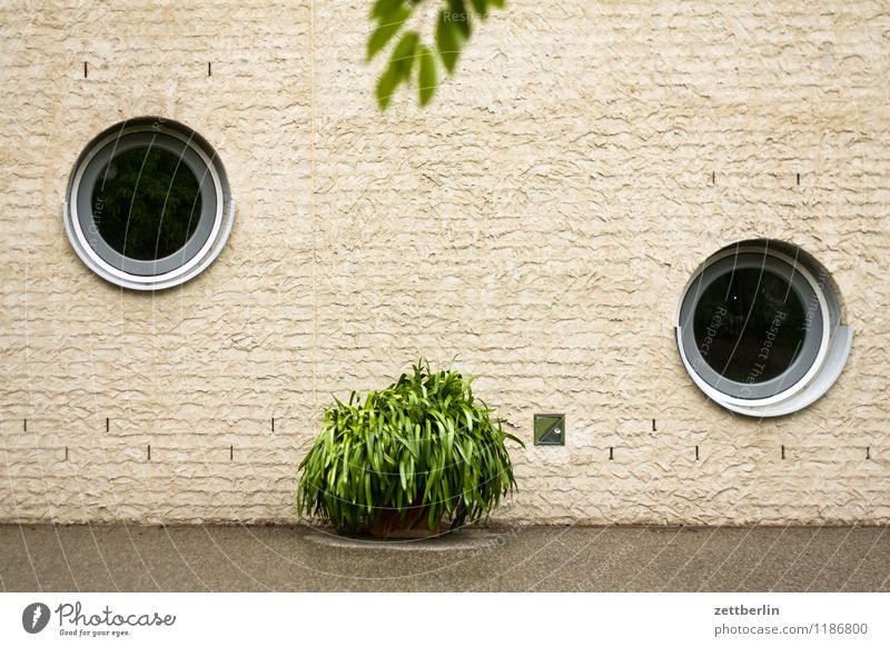 NEO SMOKING House (Residential Structure) Building Window Round Porthole Plant Foliage plant Pot plant Orangery Orangerie Wall (barrier) Wall (building)