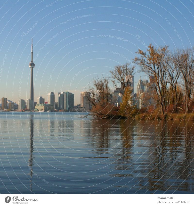 Toronto's skyline by day High-rise House (Residential Structure) Lake Tree Reflection Autumn Waves Bird Skyline CN Tower Water Blue Coast Island Toronto Iceland