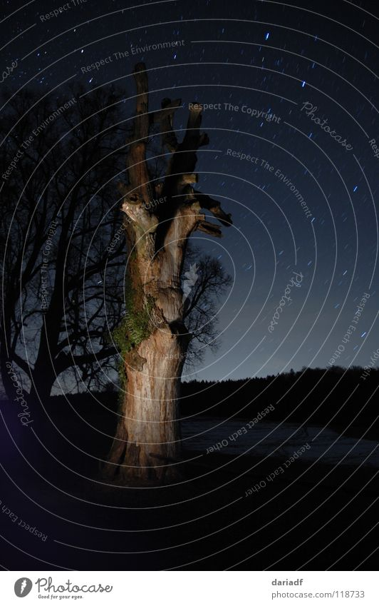 starstree Tree Illuminate Lighting Night Dark Field Forest Calm Long exposure Landscape Digital camera black Blue Sky Nature Beautiful external increase