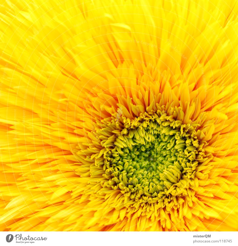 mesmerizing sun Flower Blossom Blossom leave Middle Central Square Yellow Green Physics Nature Growth Lighting Fresh Juicy Beautiful Primordial