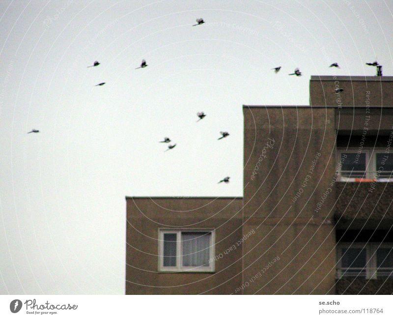 The birds Bird Black-billed magpie New building Window Prefab construction Sky Flock grey-in-grey