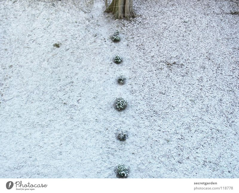 Nature White Green Tree Winter Snow Above Grass Small Sadness Park Brown Earth Room Beginning Growth