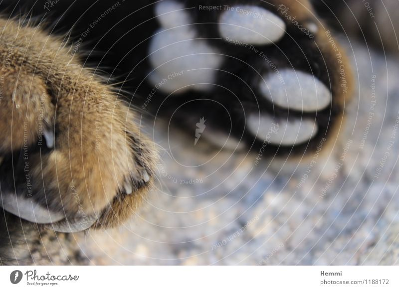 Cat paws I Animal Pet 1 Relaxation To enjoy Lie Sleep Paw Domestic cat Colour photo Exterior shot Close-up Detail Macro (Extreme close-up)