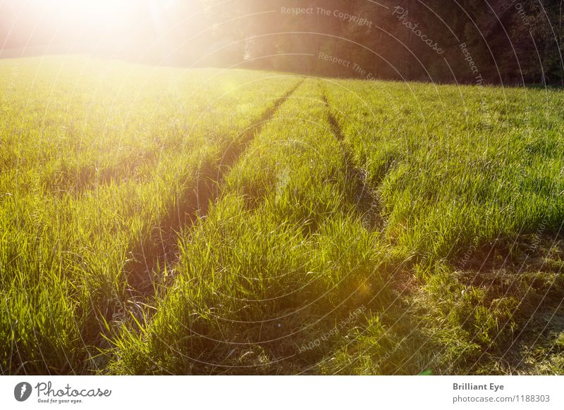 High grass in sunlight Vacation & Travel Tourism Trip Adventure Far-off places Freedom Summer Environment Nature Plant Beautiful weather Warmth Grass