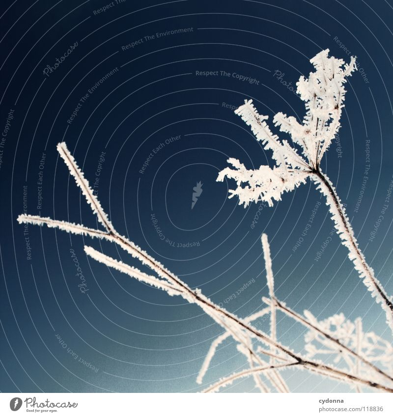 frost work Winter Cold Loneliness Calm Frozen Moody White Longing Phenomenon Blur Depth of field Plant Dry Frostwork Life snowed over snow into contast Colour