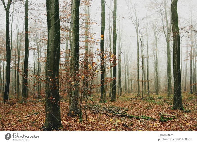 Sky Nature Plant Forest Black Environment Life Autumn Emotions Natural Gray Brown Fog Esthetic Simple Transience
