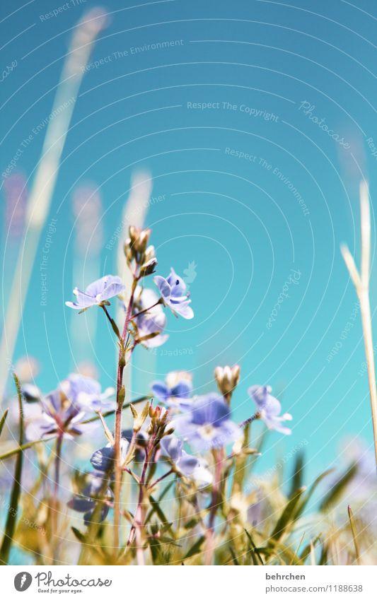 Nature Blue Plant Green Beautiful Summer Flower Leaf Spring Blossom Meadow Autumn Grass Garden Park Field