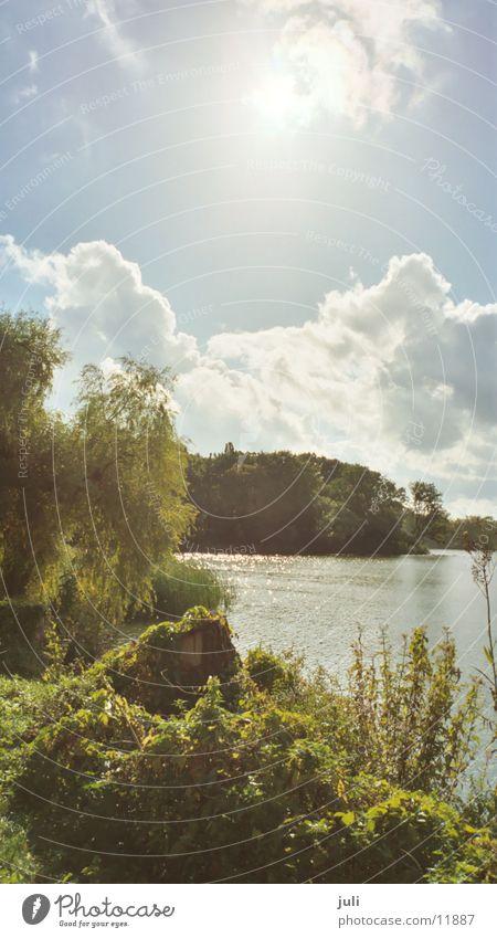 Water in Stralsund Pond Nature pickles Sun