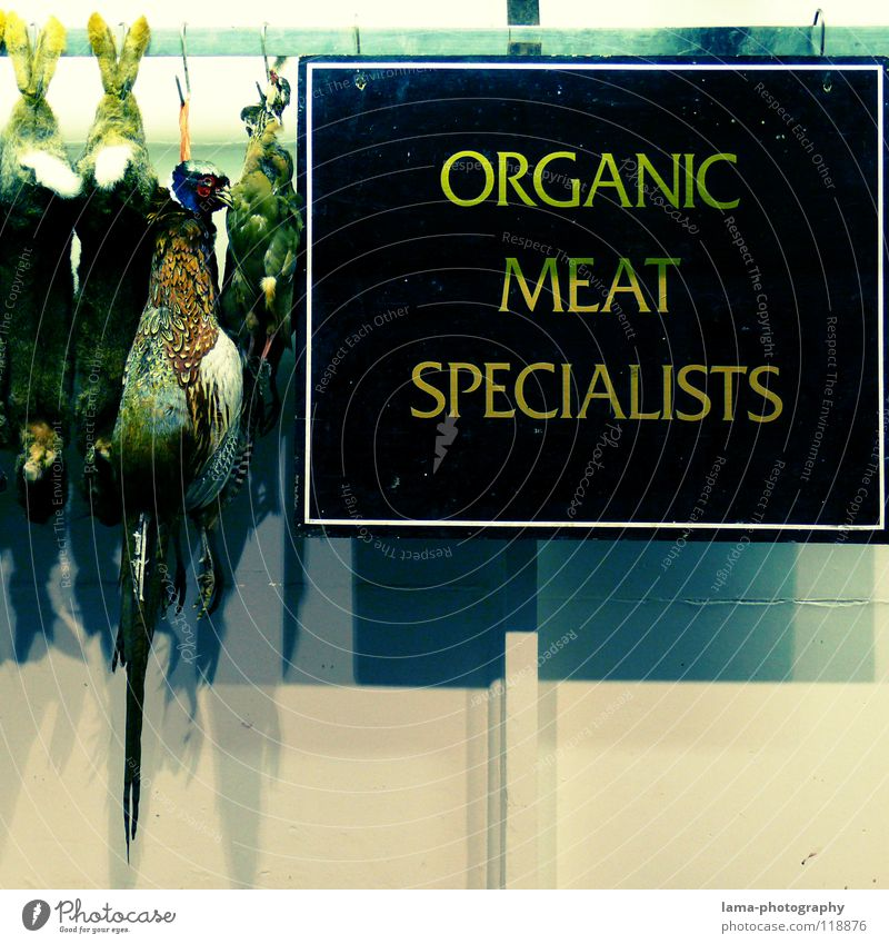 ORGANIC MEAT SPECIALISTS Poster Butcher Pheasant Hare & Rabbit & Bunny Slaughterhouse Hang Farmer's market Specialities Meat Sausage Pork tenderloin Steak Hen