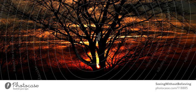 Burning sky Red Tree Dark Flame Sky Blaze Branch Warmth Sun