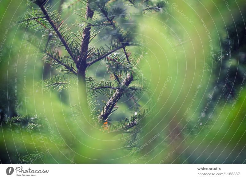 In the thicket Autumn Winter Tree Bushes Curiosity Interest Card Needle Fir tree Fir needle Twig needle branch Fir branch Detail Hide Branch Branchage Moody