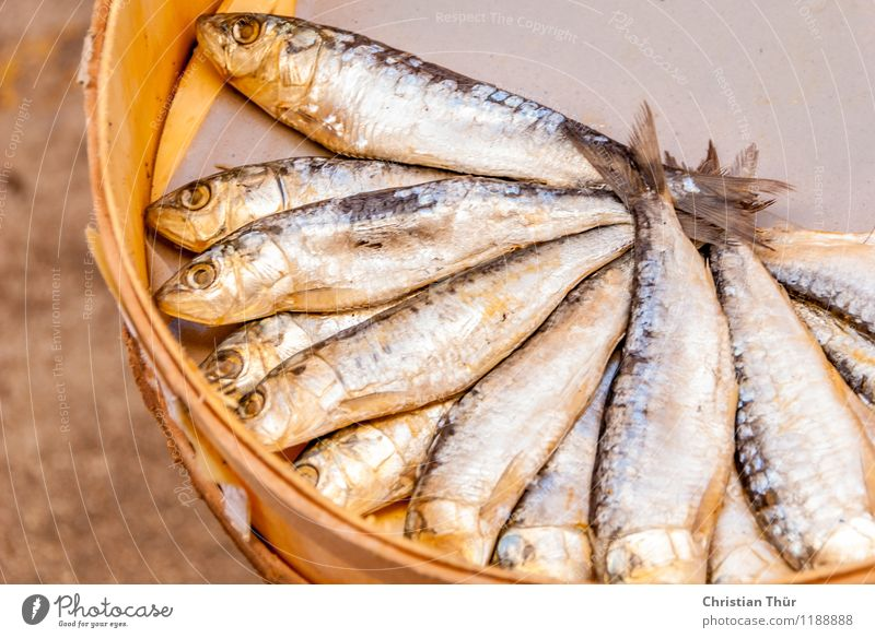 Fresh fish on the market Food Fish Nutrition Organic produce Vegetarian diet Diet Fasting Lifestyle Shopping Healthy Health care Healthy Eating Overweight