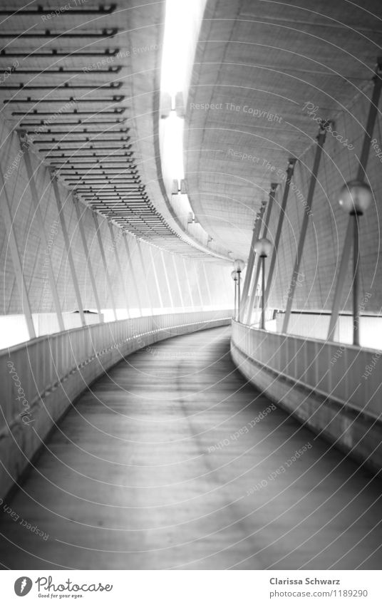 bridge Architecture Subculture Bridge Tunnel Traffic infrastructure Cycling Pedestrian Street Gray Safety Protection Curiosity Dream Fear Loneliness Expectation