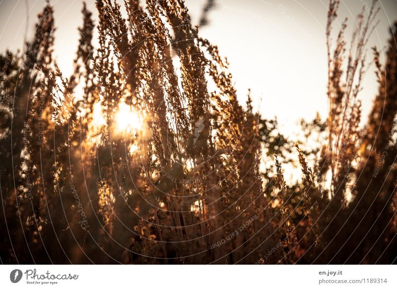 ray of hope Environment Nature Plant Sky Sun Sunrise Sunset Sunlight Summer Autumn Beautiful weather Bushes Grass Warmth Gold Orange Moody