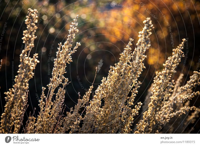 Nature Plant Summer Relaxation Landscape Calm Environment Yellow Warmth Sadness Autumn Grass Garden Idyll Bushes Climate