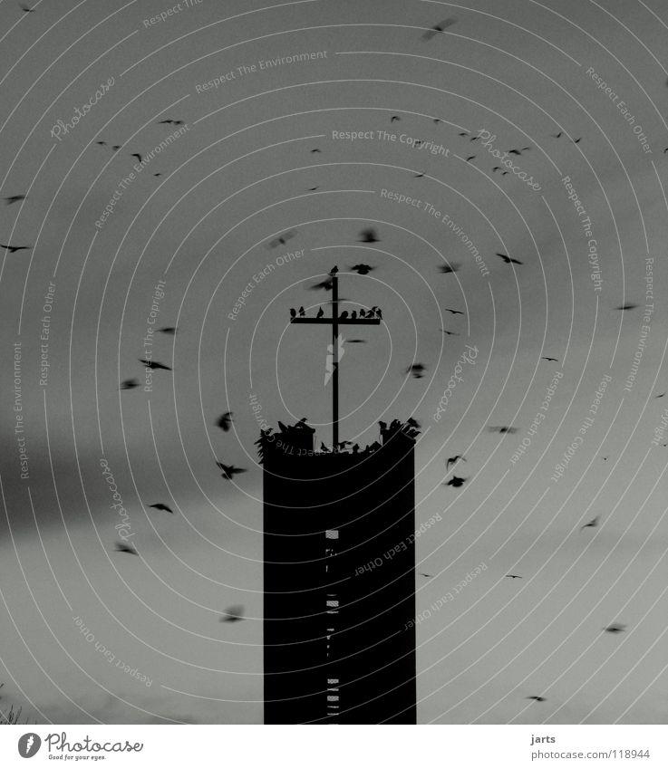 Sky Life Death Religion and faith Bird Fear Back Hope Distress Panic Hell God Christianity Deities Devil Raven birds