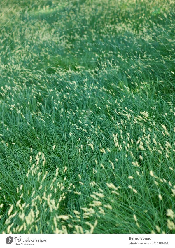 spiritus ubi vult spirat Environment Nature Plant Grass Life Wind Dynamics Meadow Change in direction Green Natural Comforting Airy Colour photo Exterior shot