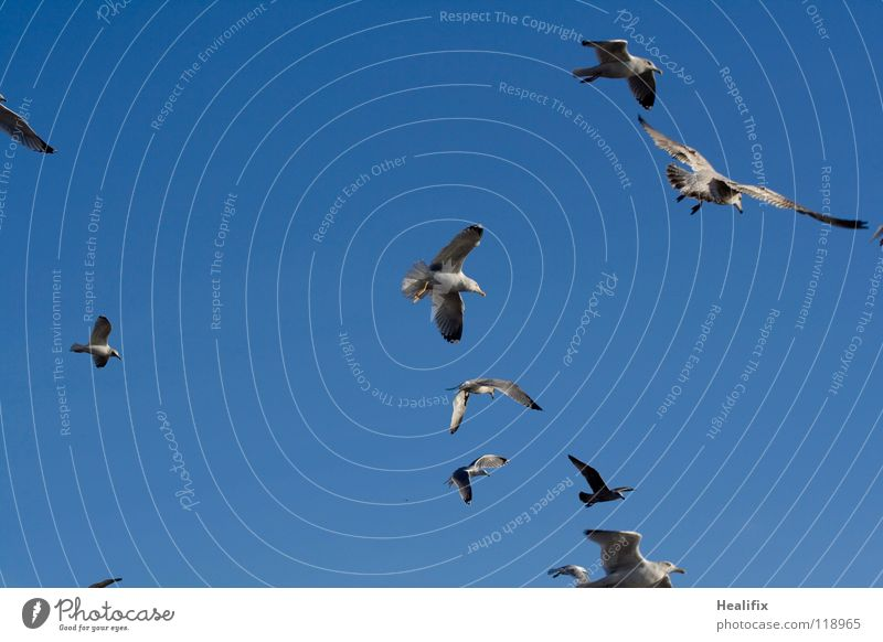 Sky Blue White Far-off places Freedom Bird Fear Tall Flying Feather Level Wing Beautiful weather Silver Seagull Panic
