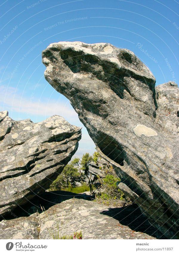 dinosaurs Dinosaur Stone Table mountain Mountain Rock Nature