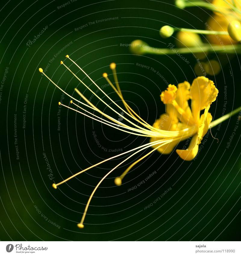 Nature Flower Green Plant Yellow Colour Blossom Fresh Asia Delicate Bud Pistil Delicate Fertilization
