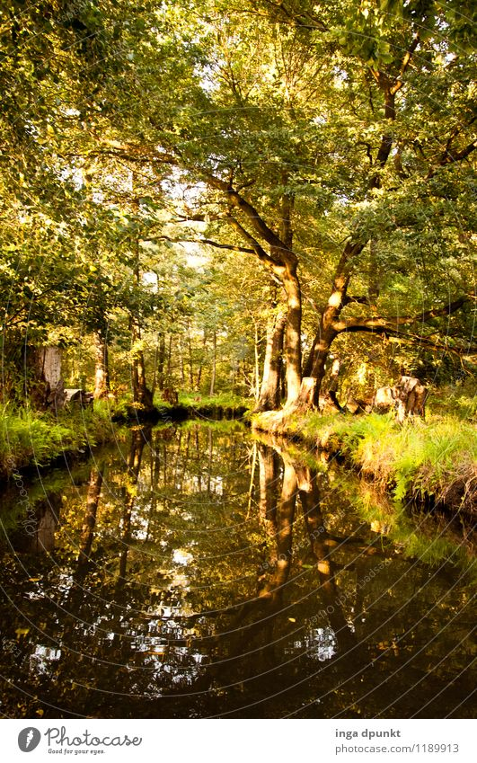 Spreewald tour Environment Nature Landscape Water Summer Beautiful weather Plant Tree Deciduous forest Forest River bank Brandenburg Germany Discover Relaxation