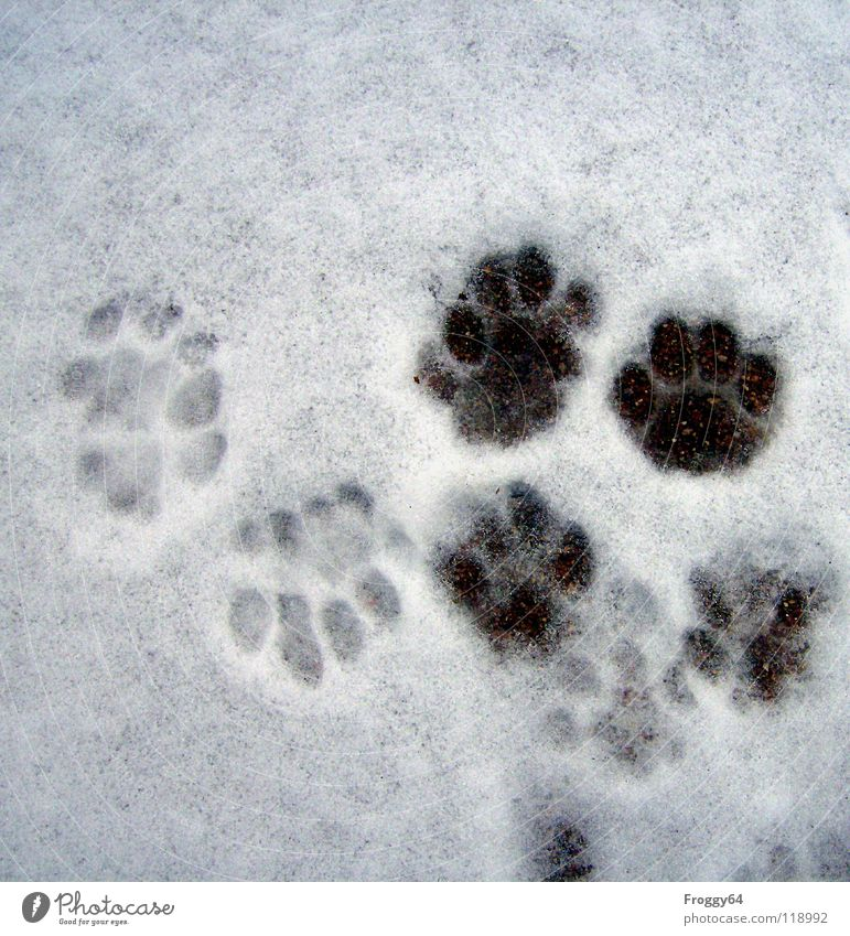 tracing... Black White Cat Paw Land-based carnivore Winter Cold Tracks Footprint Black & white photo Mammal Feet Snow Anna Froggy64 froggy terrace