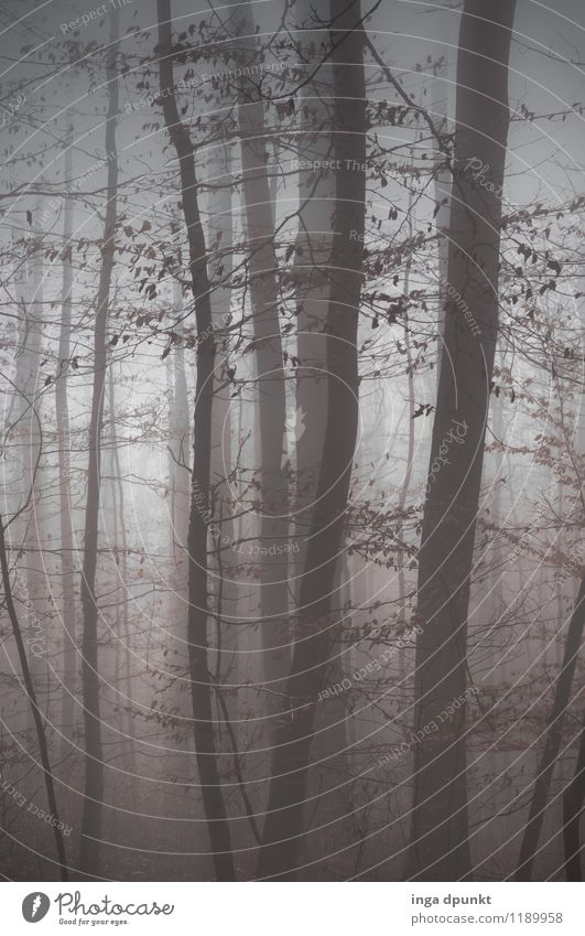 cloud forest Environment Nature Landscape Autumn Winter Weather Fog Plant Tree Forest Cloud forest Beech wood Exceptional Dark Fantastic Gray Seasons Unclear