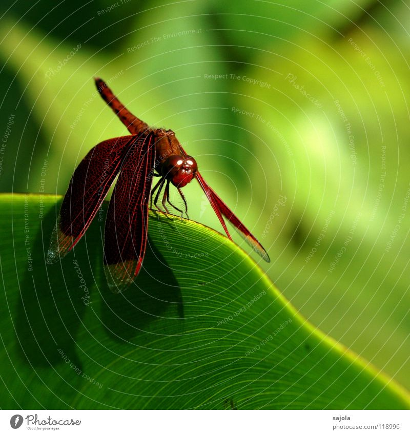Green Red Leaf Eyes Animal Wait Esthetic Animal face Asia Wing Protection Insect To hold on Wild animal Noble Ease