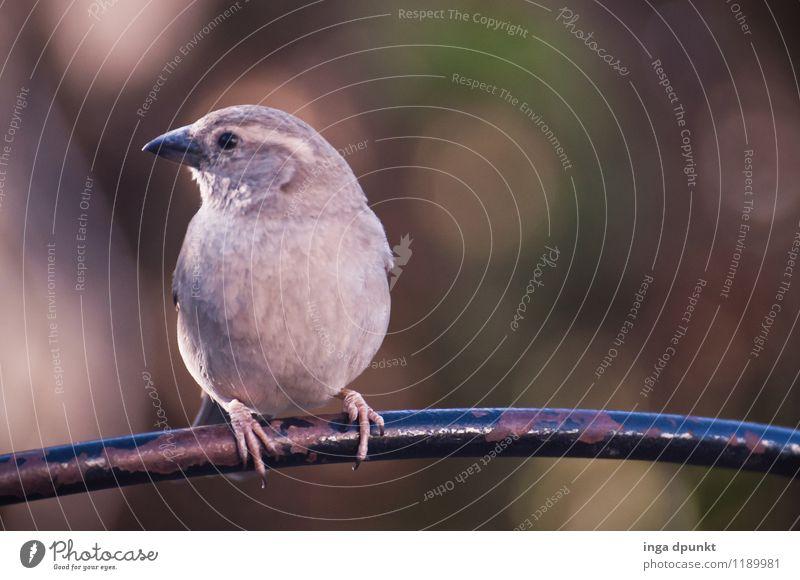 Nature Animal Environment Natural Gray Brown Bird Contentment Wild animal Animal face Sparrow Songbirds