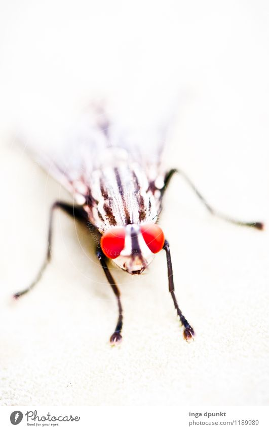 fly face Environment Nature Animal Wild animal Fly Animal face Wing Insect Eyes 1 Observe Crawl Exceptional Red Black White Colour photo Exterior shot Deserted