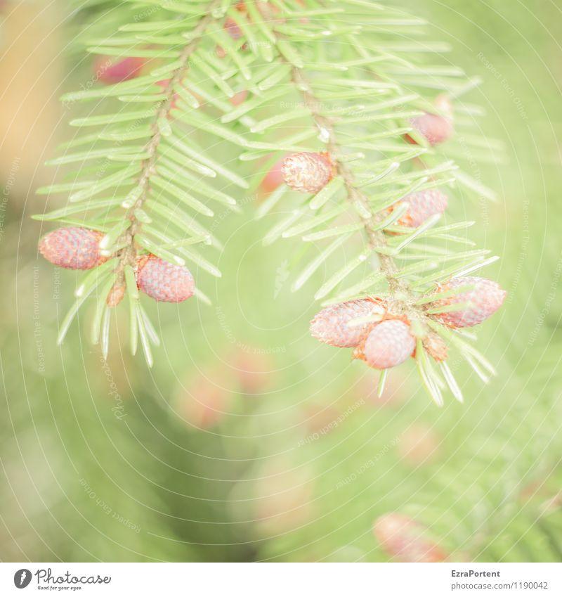 "<font color=""#ffff00"">-=O´zapft=- sync:ßÇÈâÈâ Environment Nature Plant Spring Summer Tree Wild plant Forest Esthetic Bright Natural Brown Green"