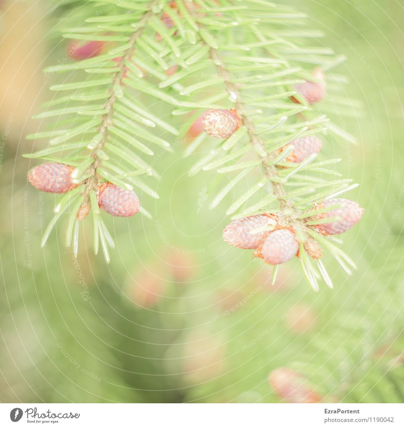 Nature Plant Green Summer Tree Forest Environment Spring Natural Brown Bright Esthetic Coniferous trees Wild plant Twigs and branches Fir needle