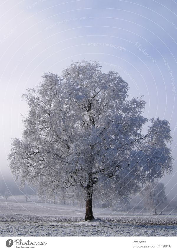 Sky White Tree Blue Winter Calm Black Cold Snow Gray Landscape Field Fog Switzerland Snowscape Hoar frost