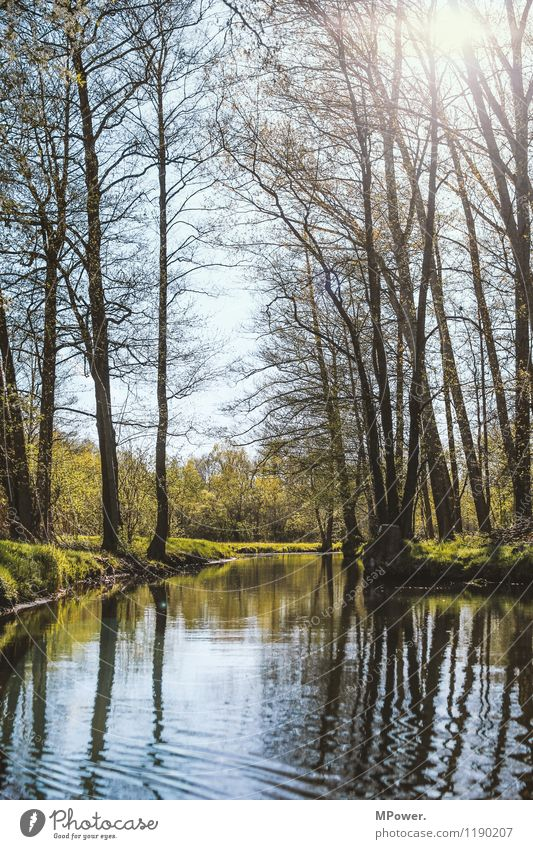 Spreewald Environment Nature Landscape Water Climate Weather Beautiful weather River bank Spring Waves Sun Colour photo Exterior shot Deserted