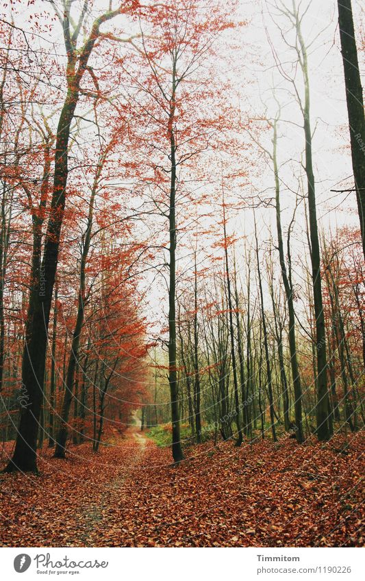 Nature Plant Green Forest Black Environment Emotions Autumn Natural Brown Esthetic Beautiful weather Autumn leaves