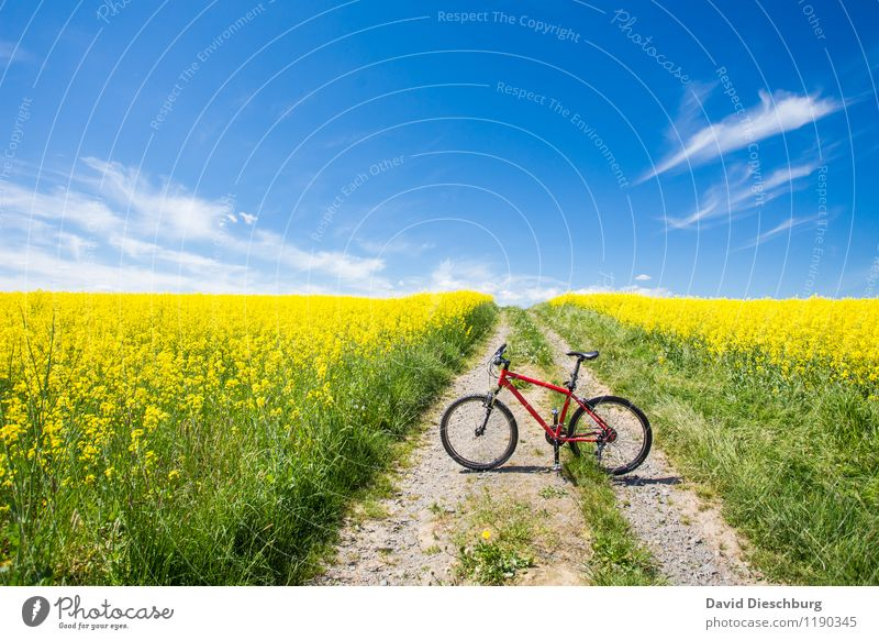 bike season Leisure and hobbies Vacation & Travel Cycling tour Summer Summer vacation Agriculture Forestry Landscape Sky Clouds Spring Beautiful weather Plant