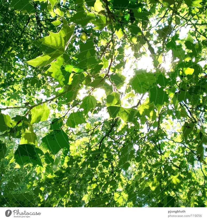 sunlight Light Sunbeam Tree Leaf Fresh Spring May June Hope Forest Green Nature Happy