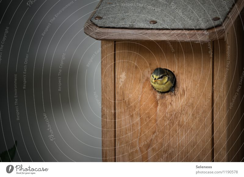 Young hopper Environment Nature Animal Wild animal Bird Animal face Tit mouse 1 Baby animal Relaxation Small Nesting box Colour photo Exterior shot