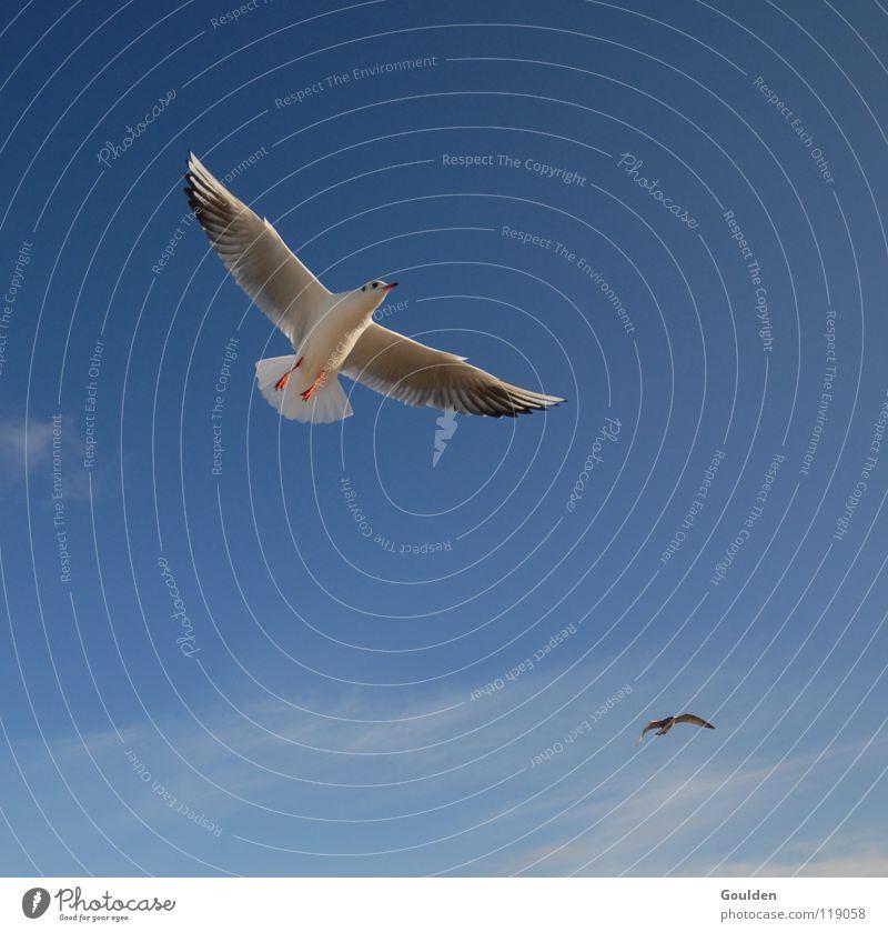Vochelübawassa 1 Seagull Ocean White Coast Vacation & Travel Sailing Warmth Relaxation Dream Bird Black-headed gull  Waves Beach Air Current Go up Sky Blue