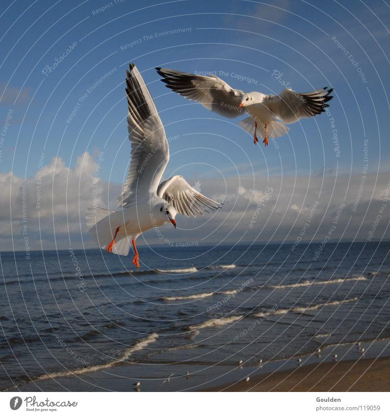 Vochelübawassa 2 Seagull Ocean White Coast Vacation & Travel Sailing Warmth Relaxation Dream Bird Black-headed gull  Waves Beach Air Current Go up Sky Blue