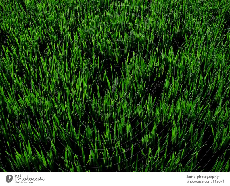 orange Grass Meadow Field Green Blade of grass Spring Summer Juicy Fresh Growth Flourish Sprout Gardener Flower Gaudy Easter egg nest Background picture Pattern