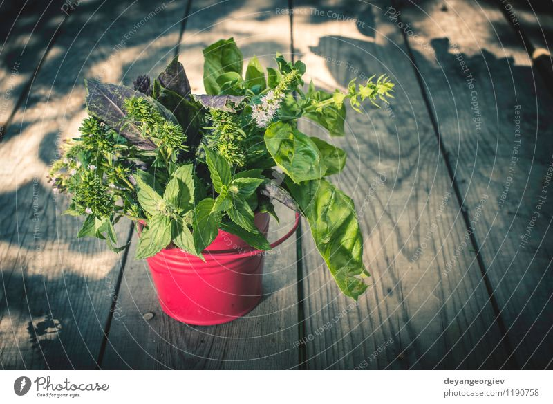 Fresh herbs in garden Vegetable Herbs and spices Garden Gardening Nature Plant Leaf Natural Green White food Mint background Ingredients healthy wooden herbal