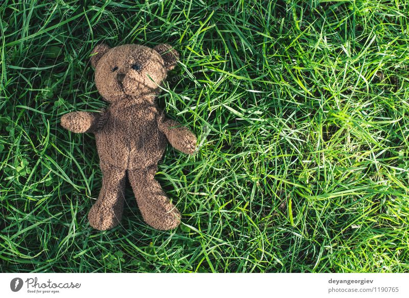 Teddy bear on the grass. Child Green White Joy Animal Yellow Love Grass Natural Feasts & Celebrations Brown Park Decoration Infancy Sit Cute