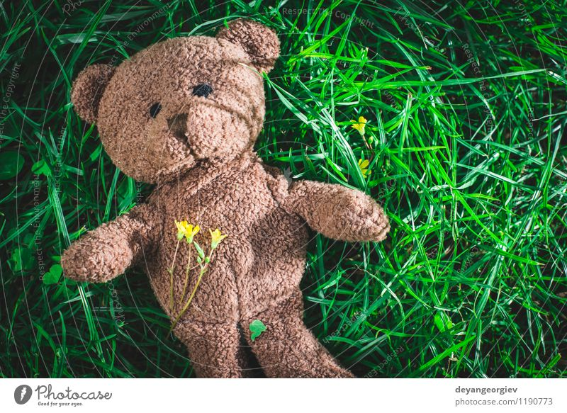Teddy bear on the grass Child Green White Joy Animal Yellow Love Grass Natural Feasts & Celebrations Brown Park Decoration Infancy Sit Cute