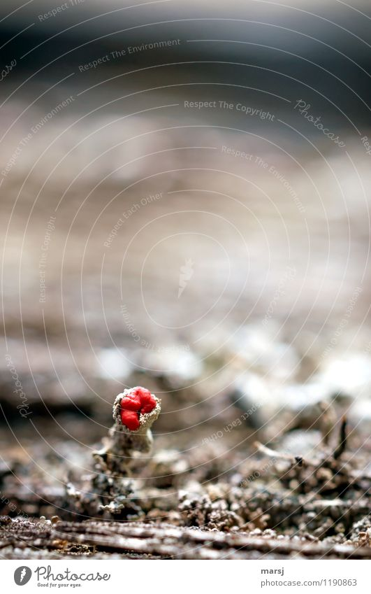 Always something red Nature Spring Plant Moss Blossom Lichen lichen blossom Blossoming Illuminate Exceptional Dark Thin Authentic Simple Disgust Gloomy