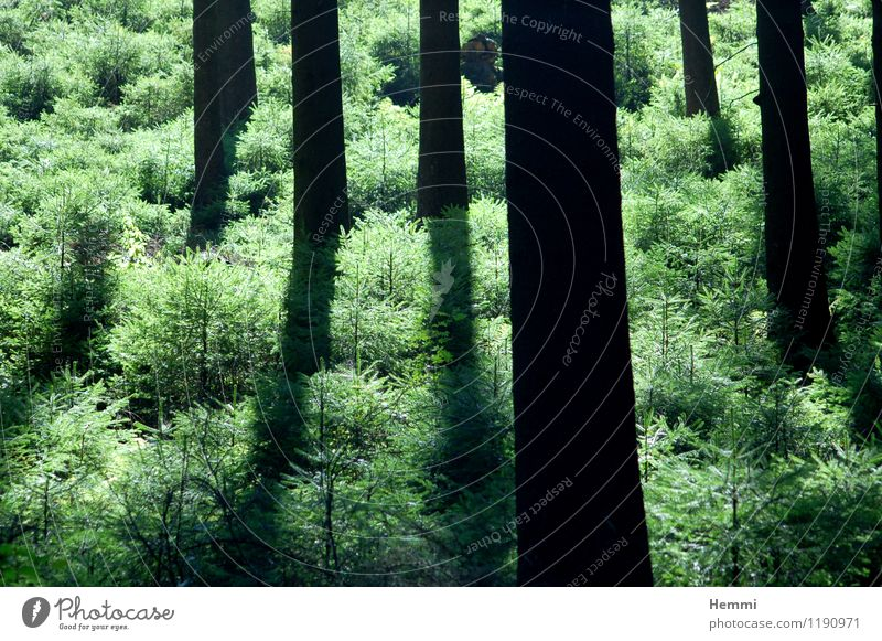Forest in the Sauerland Environment Nature Landscape Tree Meadow Field Relaxation Fitness To enjoy Running Tree trunk Tree structure Colour photo Exterior shot