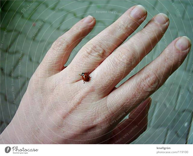 Hand Gray Stone Fingers Cobblestones Ladybird Beetle